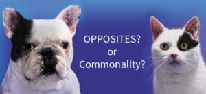 Do Opposites Attract or Is Commonality Better?